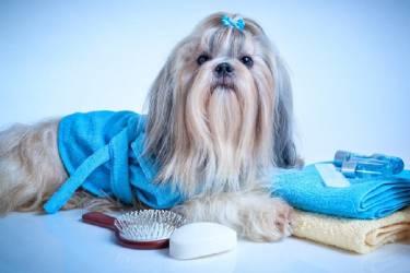 揭秘暴利偏门的新兴产业:宠物殡葬服务