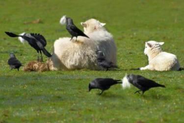 普通人薅羊毛需要做些什么?